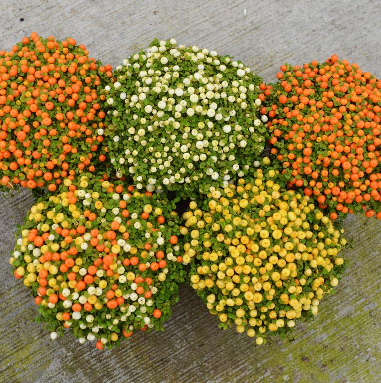plant-8cm