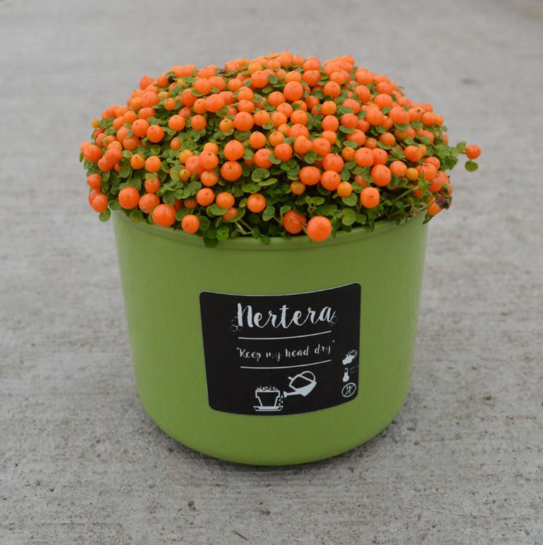 pot-groen